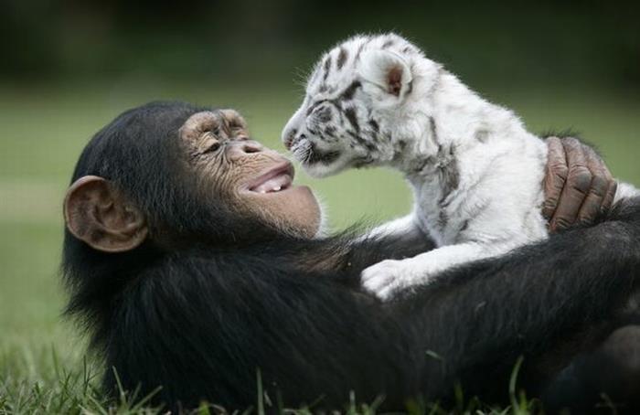 loving-animal